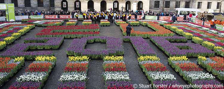 Tulips Amsterdam's Dam Square on National Tulip Day 2016.