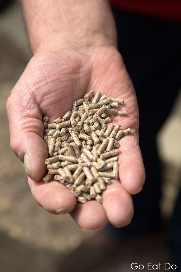 Want to try? Grain used to feed pigs at the pig farm at Lilbosch Abbey.